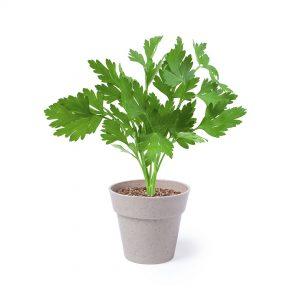 2 mini macetas para plantar perejil y menta